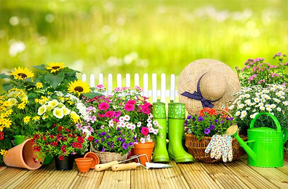 園芸療法が団塊世代の心身を健康に保つ!